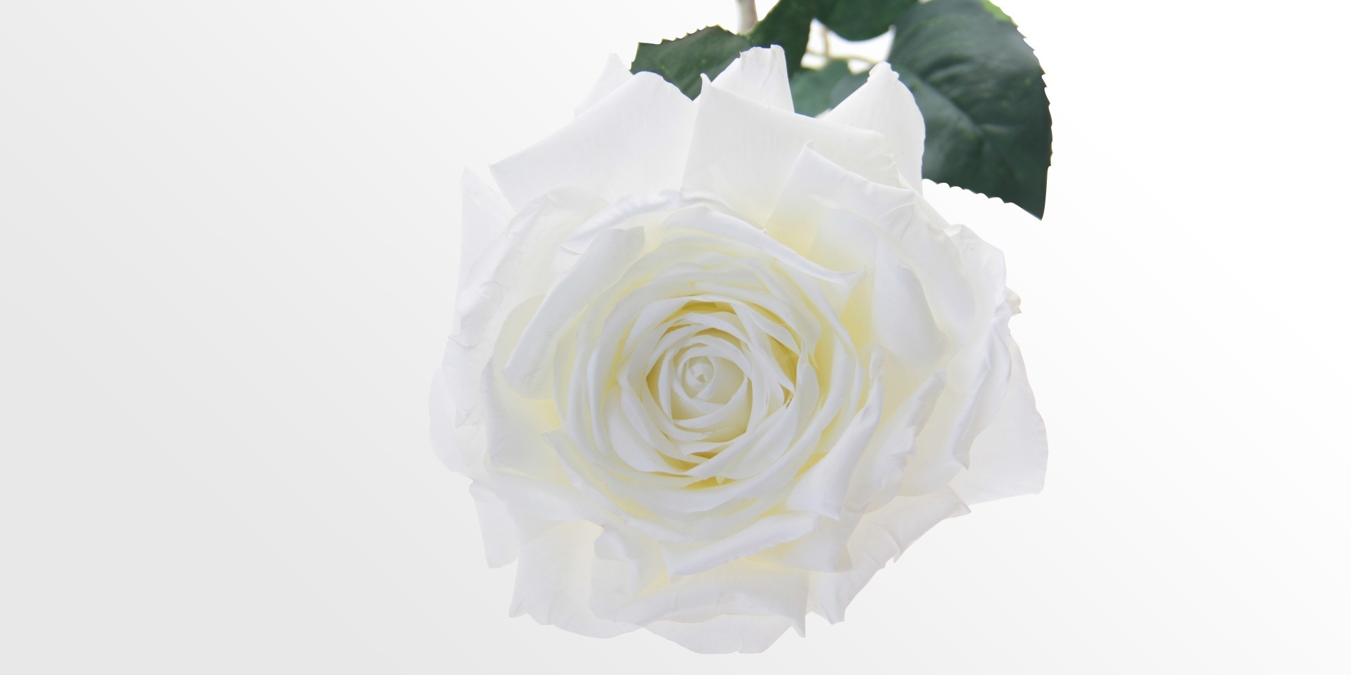 Artificial White Rose Faux Flowers