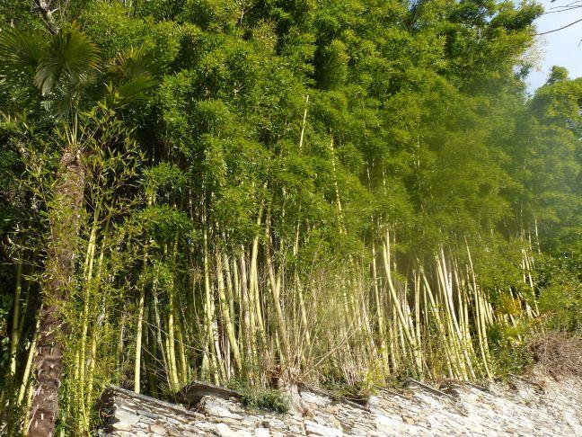 bamboo forest, eco-friendly