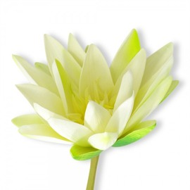 Artificial Water Lily - White