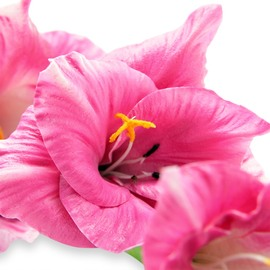 Artificial Gladiolus - Pink